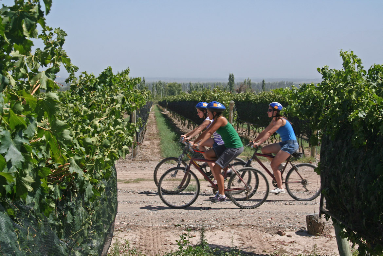 tour bike & wine nei colli del Trasimeno